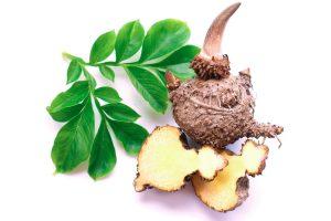 Glucomannan Konjac Plant