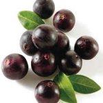 Acai fruit extract